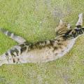Kočičí blechy - likvidace