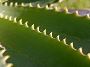 Aloe, Alpa, Acylpyrin - mazání