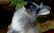 Ukázkové druhy malých plemen králíků